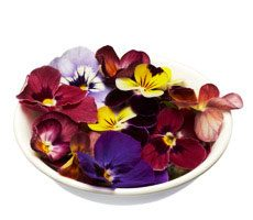 Merry Melody Edible Flowers